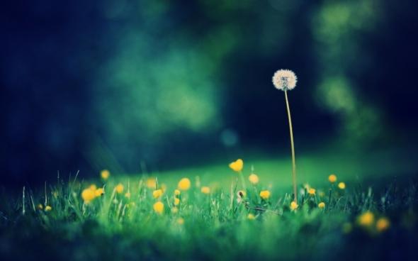 nature%20flowers%20grass%20fields%20dandelions%201920x1200%20wallpaper_www_wallpaperhi_com_79