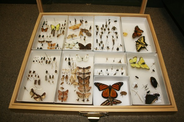 FINALInsect-Collection_20120911_0137